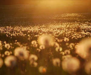 sun, flowers, and nature image