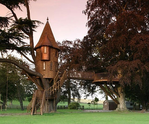 treehouse and tree image