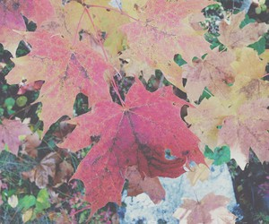color, fall, and leaf image