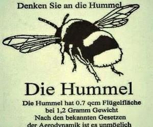 deutsch, hummel, and spruch image