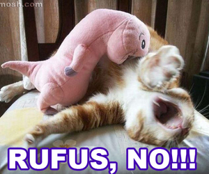 cat, no, and rufus image