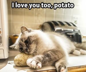 potato, cat, and cute image