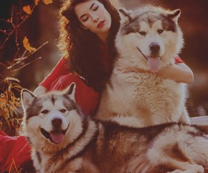 autumn, beautiful, and dogs image
