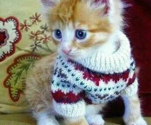 animals, sweater, and cute image