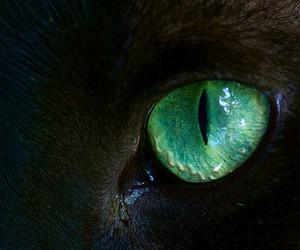 cat eye image