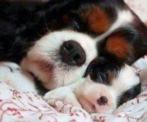 dogs, puppy, and sleepingdog image