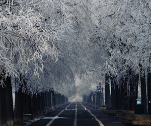 december, road, and snow image
