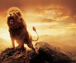 lion, narnia, and king image