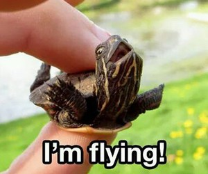 fly, fun, and turtle image