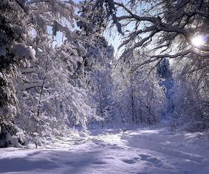 snow, winter, and wonderland image