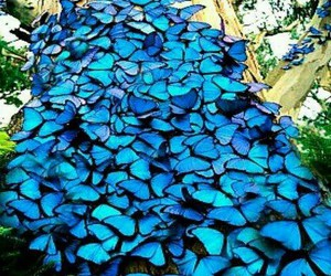blue, butterflies, and fly image