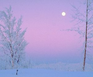 winter, frost, and snow image