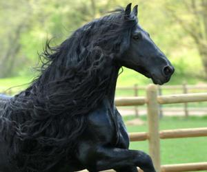 beautiful, horse, and black image