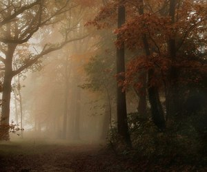forest and trees image