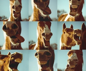 funny and horse image
