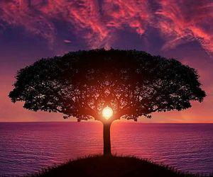 tree, sunset, and sun image