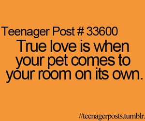 pet and teenager post image