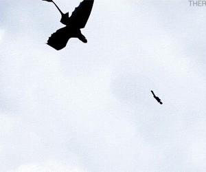 dragon, fly, and gif image