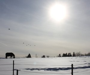 horse, peace, and winter image