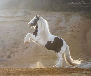 amazing, beautiful, and horse image