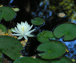 exterior, lilly, and pond image