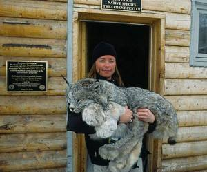 cat and lynx image