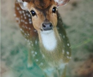 animals, deer, and eyes image