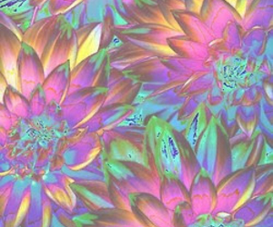 flowers, trippy, and wallpaper image