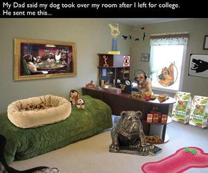 dog, funny, and college image