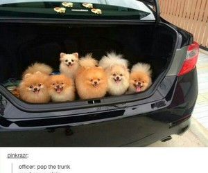 puppy, dog, and car image
