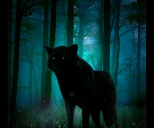 wolf, dark, and forest image