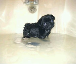 Animales, bath, and cute image