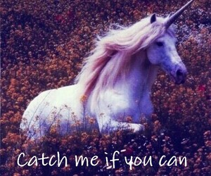 horses, run, and unicorn image