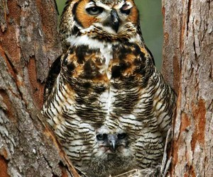 animals and owls image