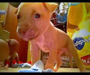 Awe, dope, and pitbull image