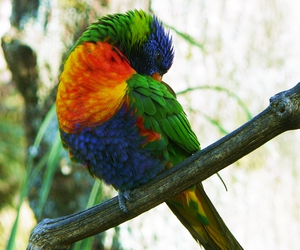 bird, colors, and nature image