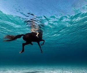 horse, swimming, and ocean image
