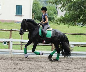 equestrian, fashion, and green image