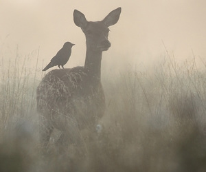 bird, deer, and misty image