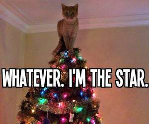 cat, star, and christmas image