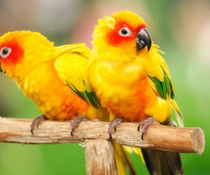 birds, colorful, and yellow image