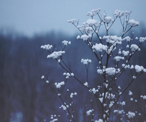 flowers, winter, and nature image