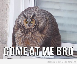 funny and owl image