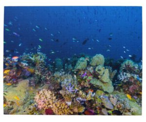 coral, diver, and sea image