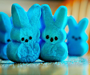 blue bunny biscuits image