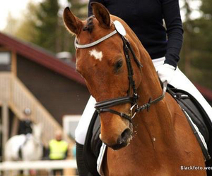 amazing, voll, and dressage image