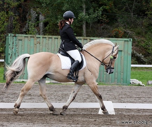 dressage, dressur, and tunier image