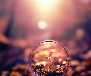 nature, bubbles, and plants image