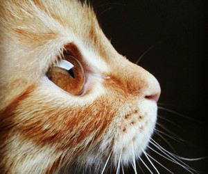 cat, eyes, and love image