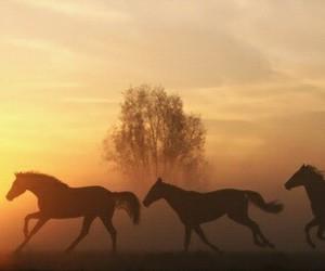 horses, freedom, and sun image